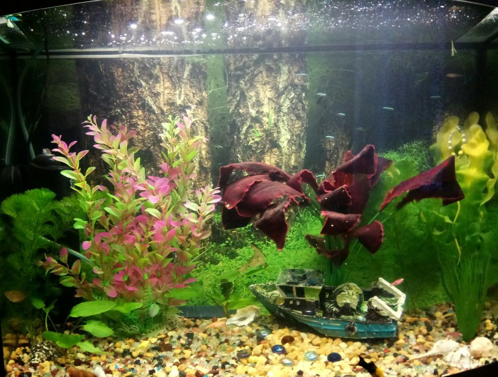аквариумная вода является отличной альтернативой покупке удобрений