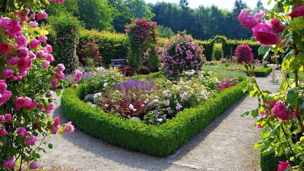 цветы многолетние для дачи