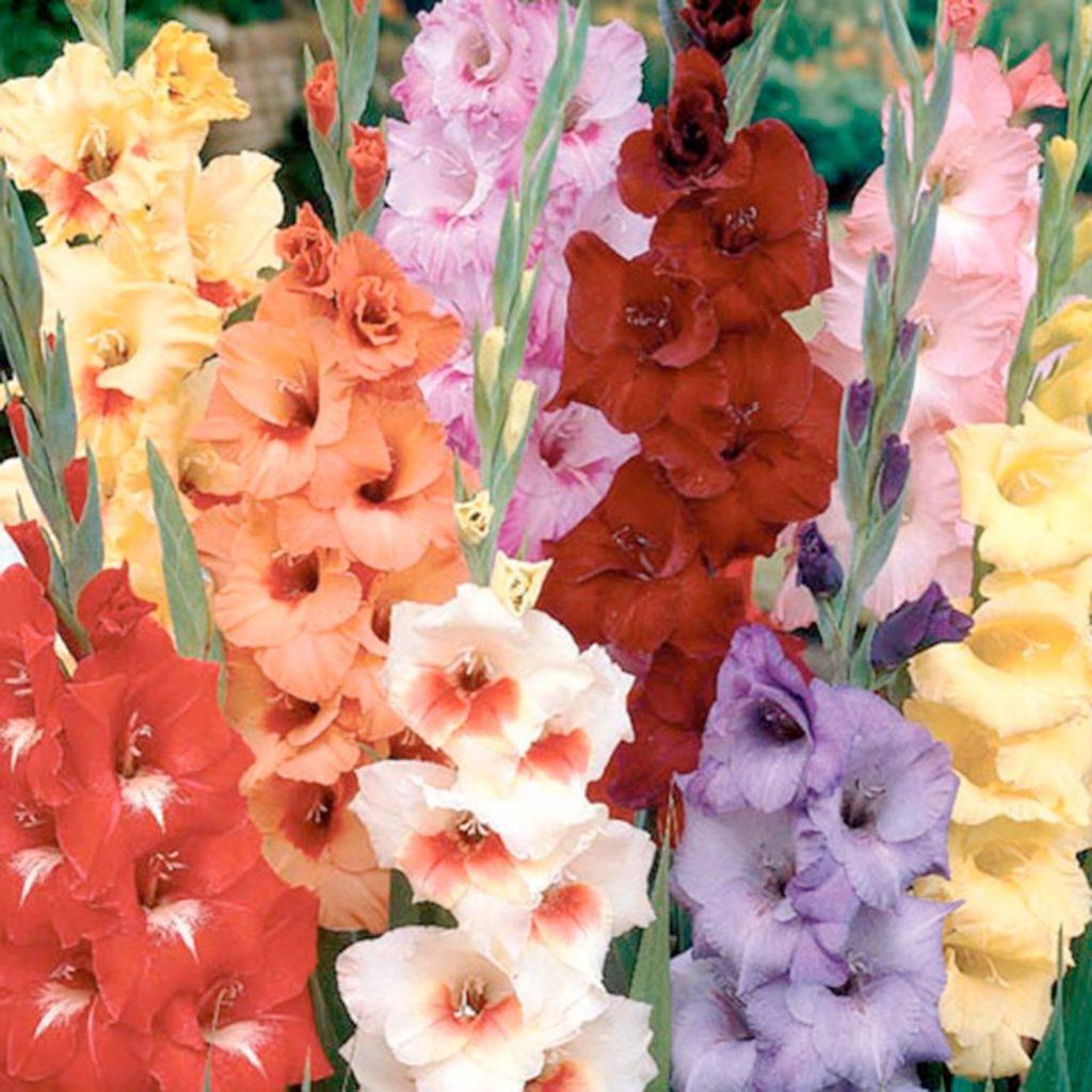 посаженные цветы