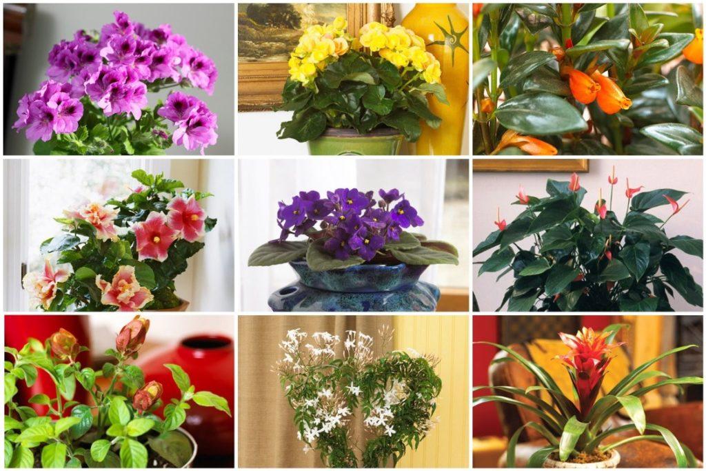 Подкармливать домашние цветы следует гораздо чаще