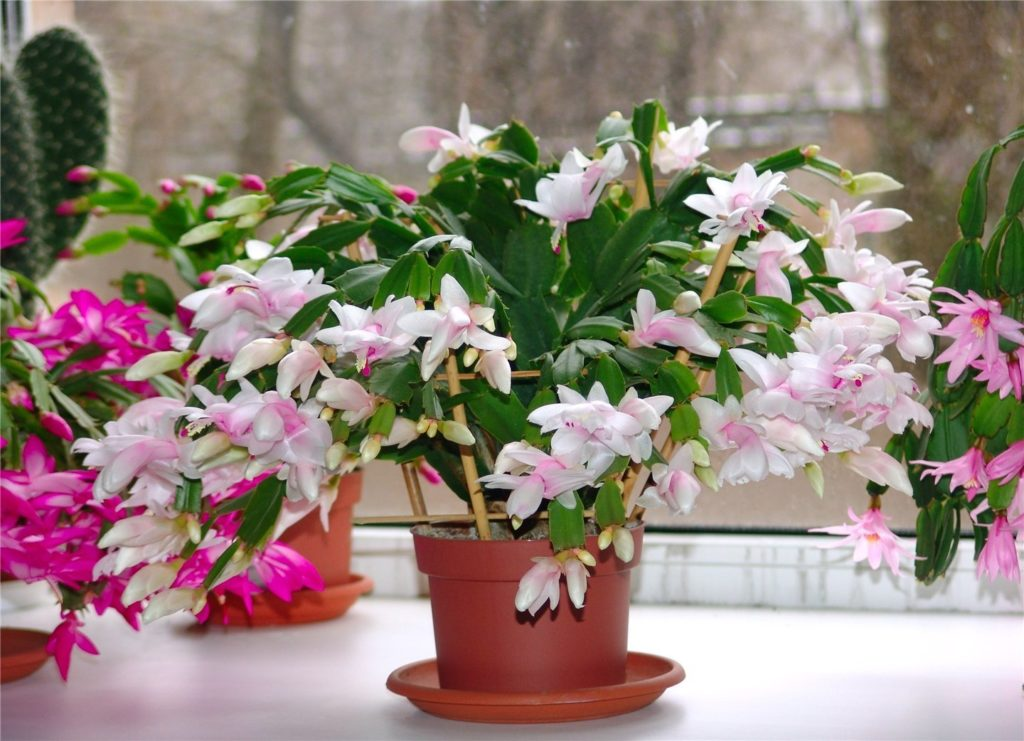 удобрение для комнатных растений помогло