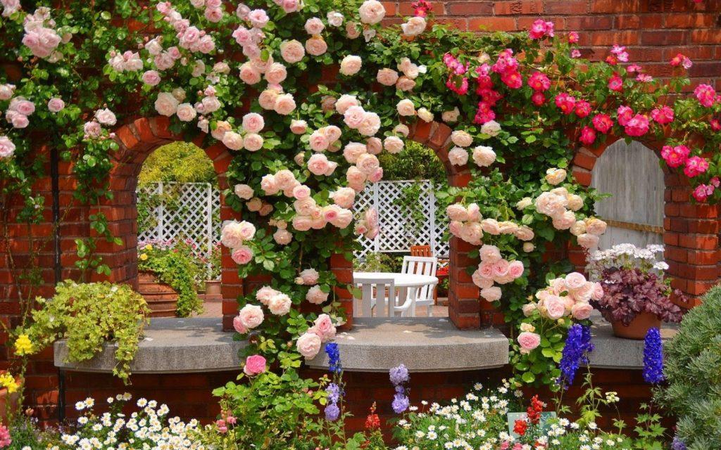Розы-климберы или клаймберы