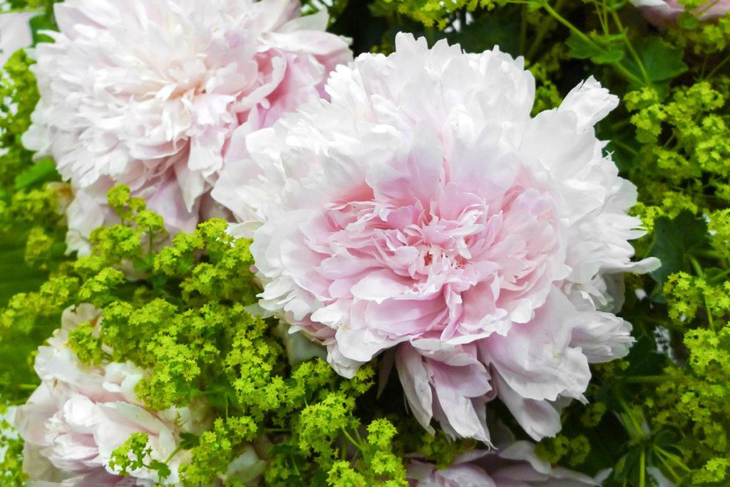 фото неприхотливых цветов