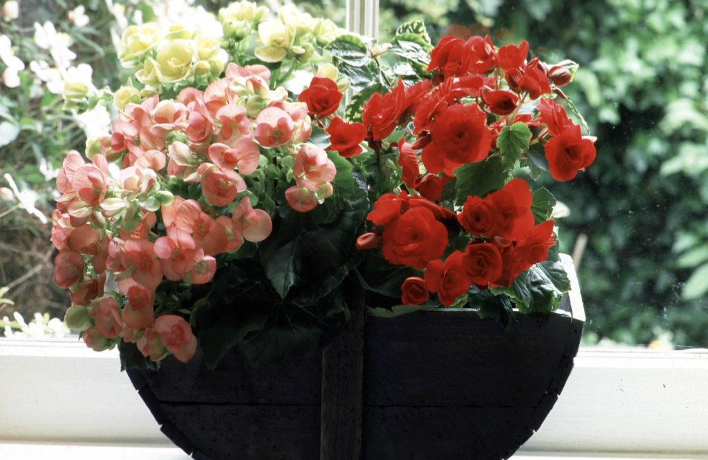 удобрение для комнатных цветов в домашних условиях