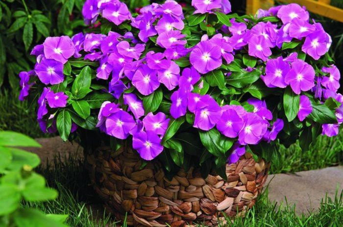 Цветы многолетние — 50 фото неприхотливых растений для дачи