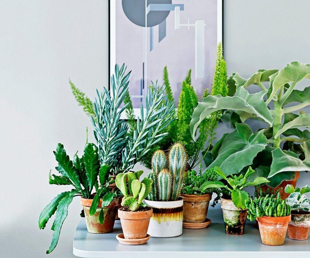 подкормка комнатных цветов домашними средствами